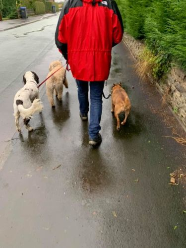 Tony Dog Walker in Cheddleton